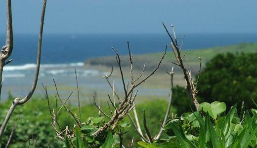 沖縄ブロガーの僕が沖縄のことをつらつら書いていきます。(食事、旅行、移住など)